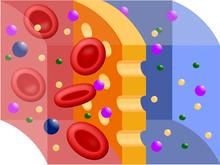 Membrana semipermeabile - Osmosi